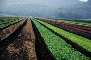 Amélioration de la sécurité alimentaire par l'horticulture