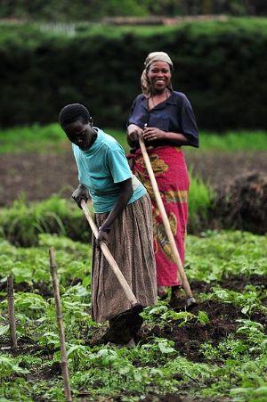 Anomalie climatique : des millions de personnes menacés par la pauvreté et la faim en Afrique