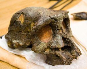 Tchad: le crâne de Toumaï suscite passion et fierté