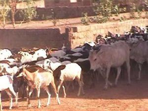 Kenya: les vols de bétails font au moins 5 morts et des dizaines de blessés dans l'est du pays