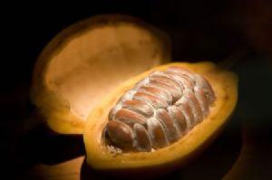 Le cacao ghanéen sera mis en promotion au salon d'Exposition de Shanghai en novembre prochain