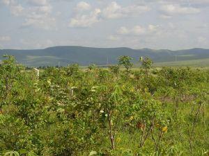 Le Congo réaffirme son engagement d'harmoniser ses politiques en matière d'environnement