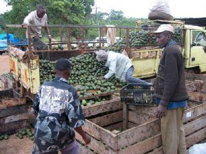 Gabon : vers la mise en place d'une agence de collecte et de commercialisation des produits agricoles