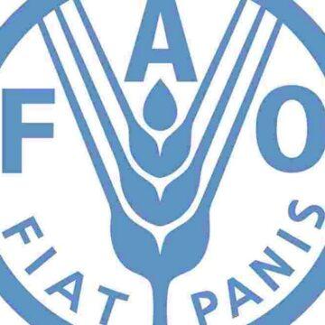 FAO : Une Camerounaise en lice pour prendre la tête de l'organisation