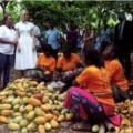 Ivanka Trump soutient les femmes cacaoyères ivoiriennes à hauteur de 2 millions de dollars